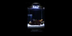 aqualighter nano marine meerwasser beleuchtung led f r nano becken. Black Bedroom Furniture Sets. Home Design Ideas